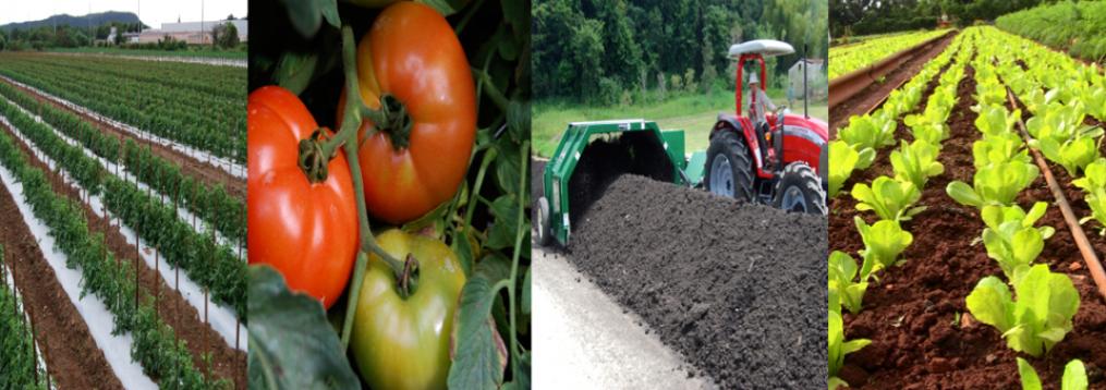 Photo of Los precios de los productos agrícolas se multiplicaron por 5,2 veces en noviembre