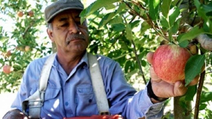 Photo of El Estado financiará programa de poda de peras y manzanas