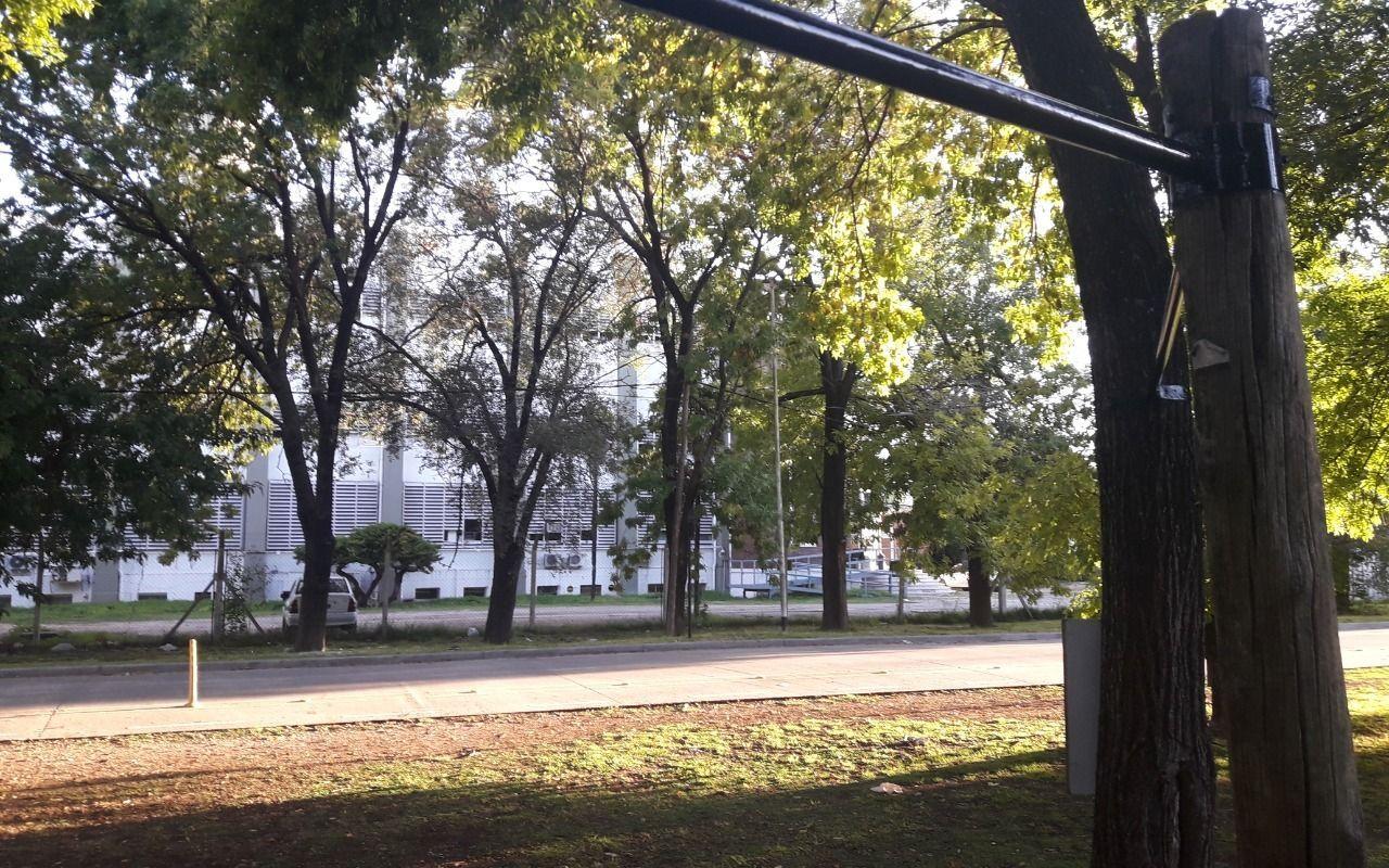 """Denuncian """"gimnasio clandestino"""" a la vera de una avenida de La Plata: """"Dañan los árboles"""""""