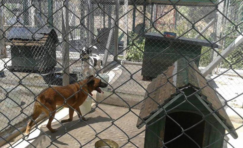 Reubicarán el refugio de perros que funciona en la Base Aérea de El Palomar